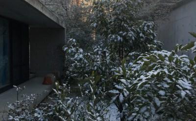 雪が降った朝