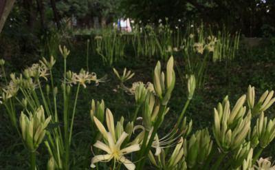 最近の仕事周辺と咲き始めた彼岸花