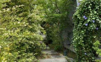 5月から6月、近所の植物たちと仕事のこと